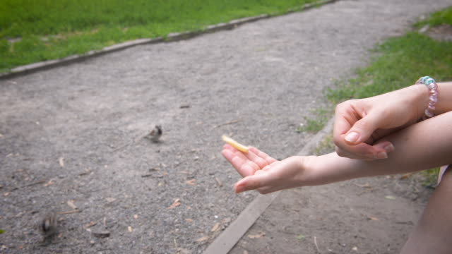 Sparrow takes food from a female's hands in the park Sparrow takes food from a female's hands in the park landing touching down stock videos & royalty-free footage