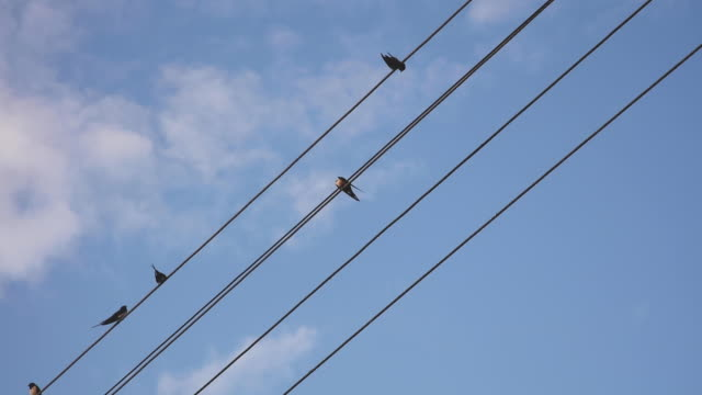 sparrows sit on electric cables. blue sky with clouds - cavo d'acciaio video stock e b–roll