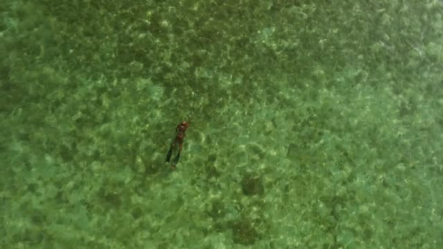 spearfishing freediver under water with a bird's-eye view - рельефная резьба стоковые видео и кадры b-roll