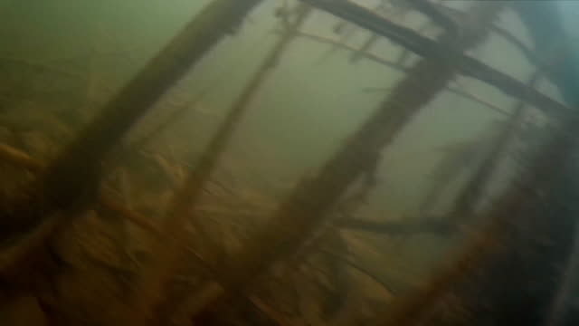 Spearfishing. Shot in the fish under water video
