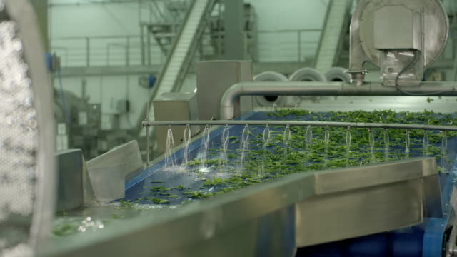 special disk controls water flow to wash lettuce salad - lattuga video stock e b–roll
