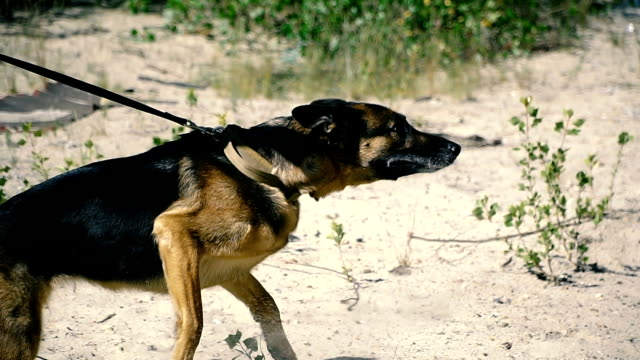 A special dog. Guard with a trained dog