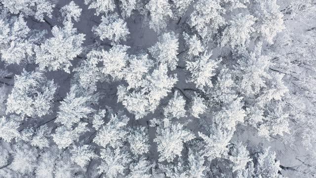 特定の気候条件。ロシア永久凍土。雪に覆われた木々や雪の森を見下ろす空中写真。 - シベリア点の映像素材/bロール
