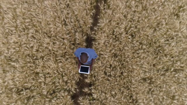 4k spectacular high aerial zoom out circular view of a black african farmer using a digital tablet and monitoring a wheat crop on a farm - zoom out stock videos & royalty-free footage