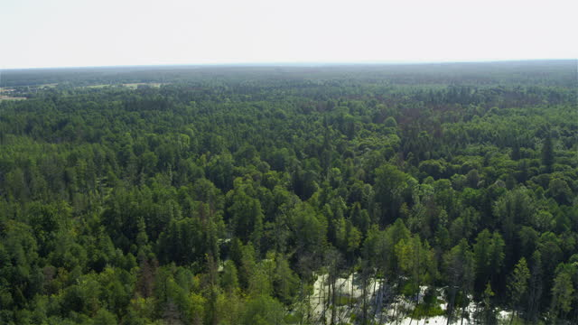 Spectacular view of Białowieza forest. Aerial view