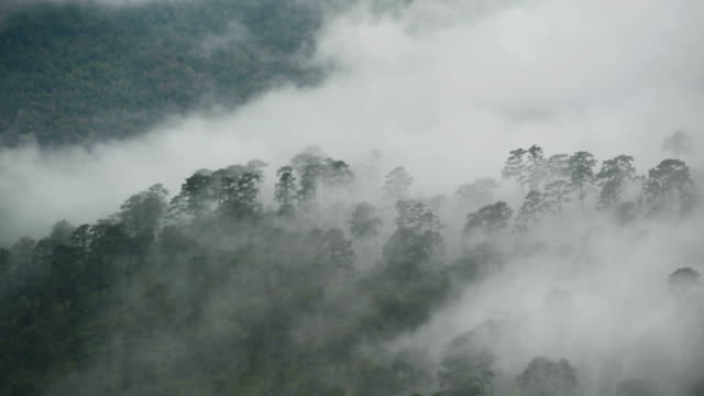 spectral mists move fluidly from right to left around and through a coniferous mixed forest on a series of mountain - monti urali video stock e b–roll