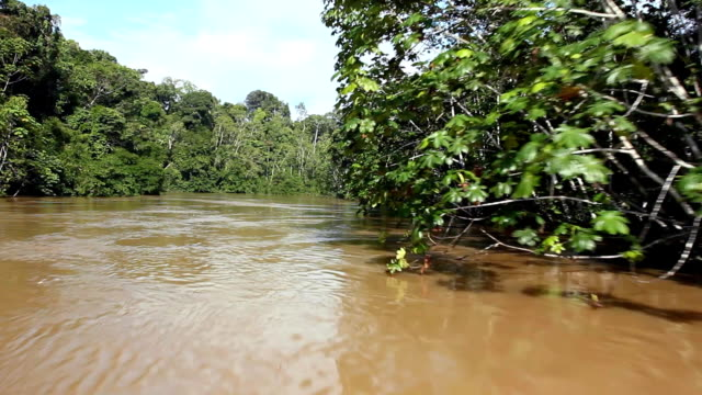 Speeding down an Amazonian river video