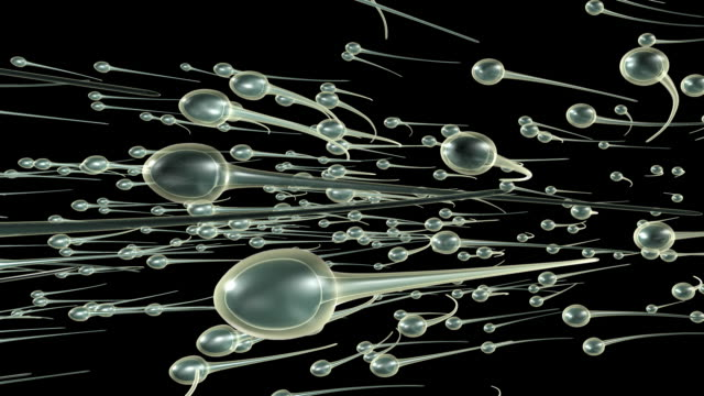 Sperm Swimming (Loopable) video