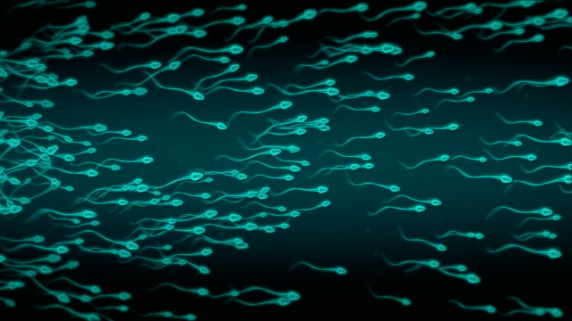 sperm - family planning stock videos and b-roll footage