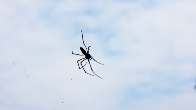 Spider and web in old house, 4K
