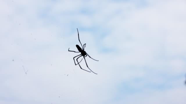 spider and web in old house, 4k - pająk filmów i materiałów b-roll