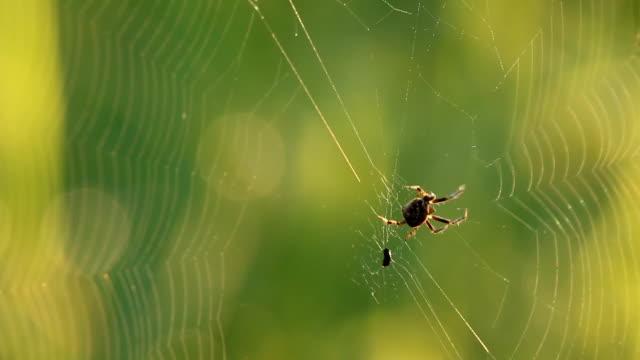 паук восхождение в интернете - white background стоковые видео и кадры b-roll