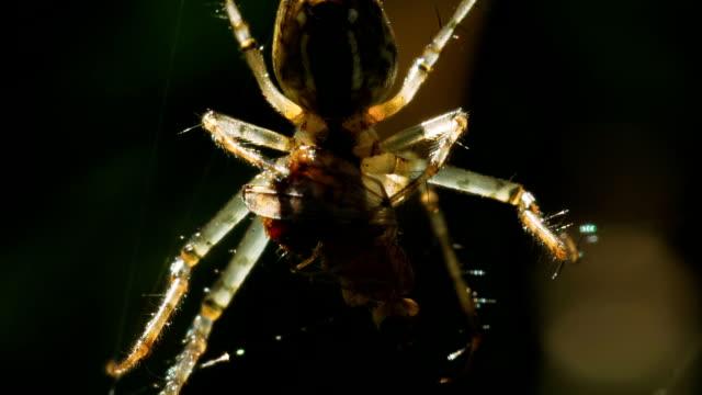 örümcek anında yiyor. - etçiller stok videoları ve detay görüntü çekimi