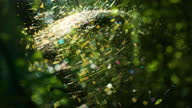 istock Spider in a funnel web Cinematic 1331038580