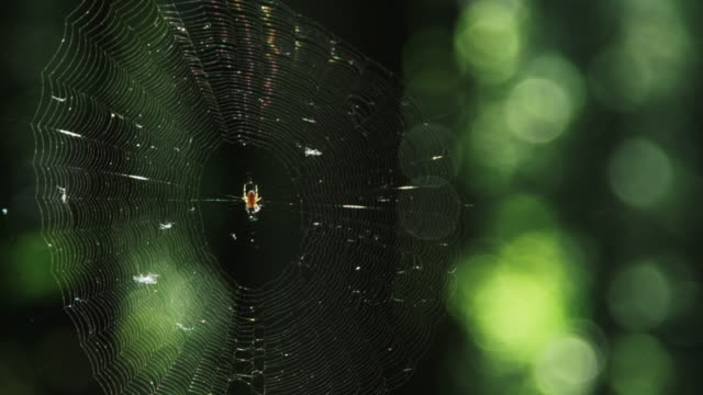 Spider In A Web In The Woods video