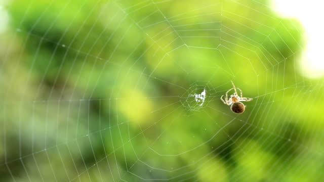 spider making a web - spindelväv bildbanksvideor och videomaterial från bakom kulisserna