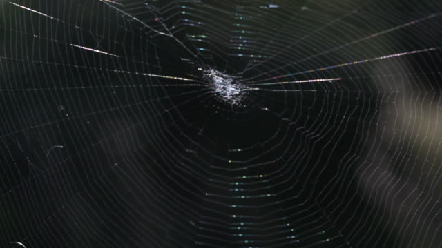 Spider Moving In Its Web video
