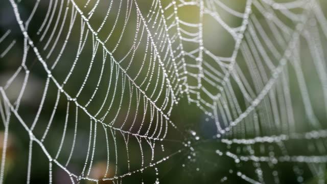 spindel på ett spindelnät i naturen med morgondagg och solljus passerar genom - spindelväv bildbanksvideor och videomaterial från bakom kulisserna