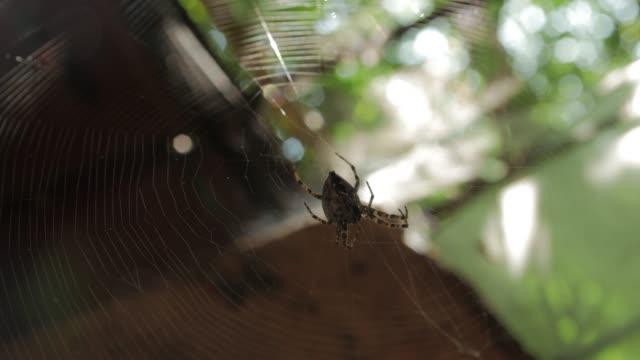 Spider On Big Web Eats