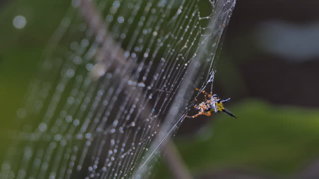 Spider on cobweb in tropical rain forest. video