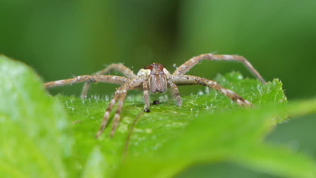 Spider on leaf in tropical rainforest. video