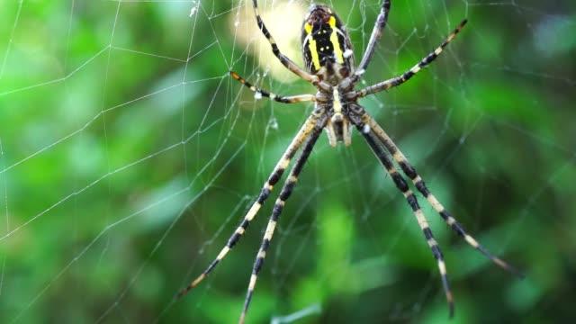 паука на паутине. паук в кустах - white background стоковые видео и кадры b-roll