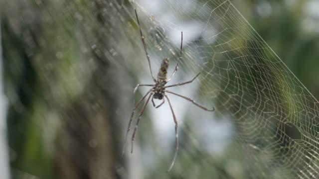 spider on web. Brown european garden spider on web with green blurred background