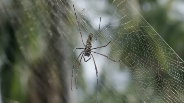 spider on web on web with green blurred background