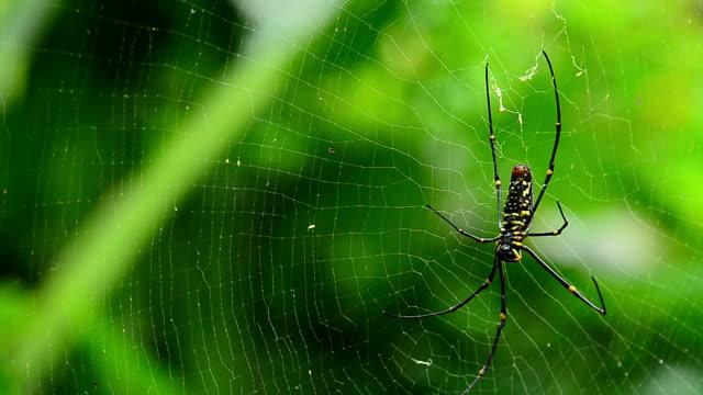 stockvideo's en b-roll-footage met spider on web - arthropod
