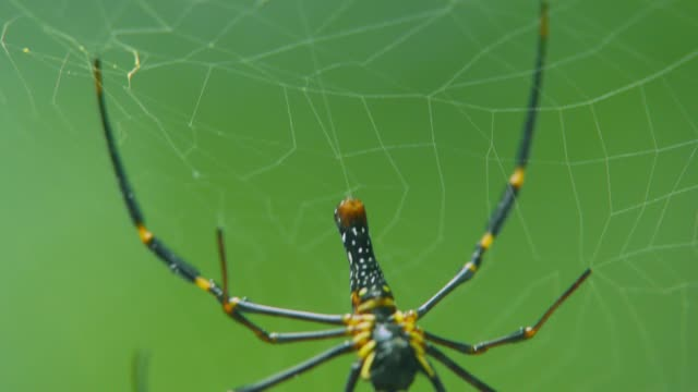 a spider sits on a web in the forest. spider on web with green blurred background. - arto inferiore animale video stock e b–roll