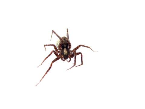 pal : spider - klip uzunluğu stok videoları ve detay görüntü çekimi