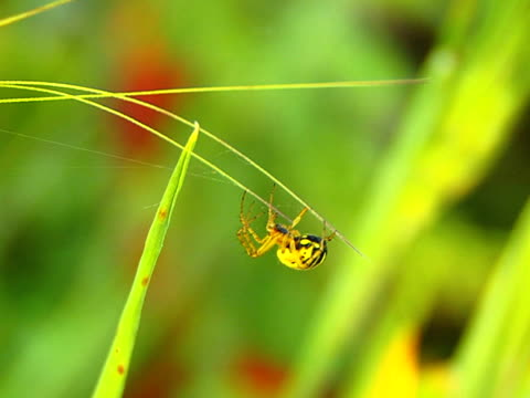 spider - {{searchview.contributor.websiteurl}} stock videos & royalty-free footage