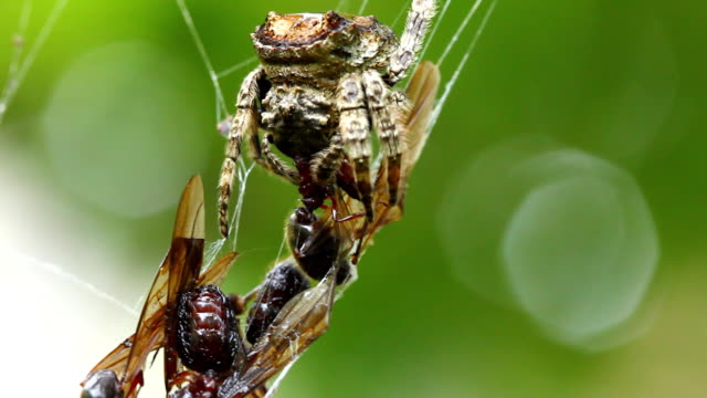 Spider Spider is hanging on its web. animal limb stock videos & royalty-free footage