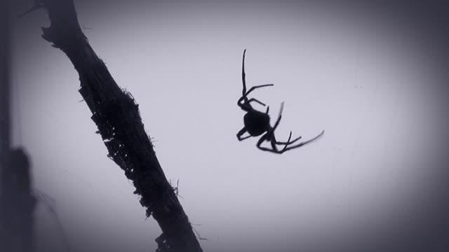 spider - spindel arachnid bildbanksvideor och videomaterial från bakom kulisserna