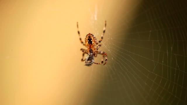 spider. - spindel arachnid bildbanksvideor och videomaterial från bakom kulisserna