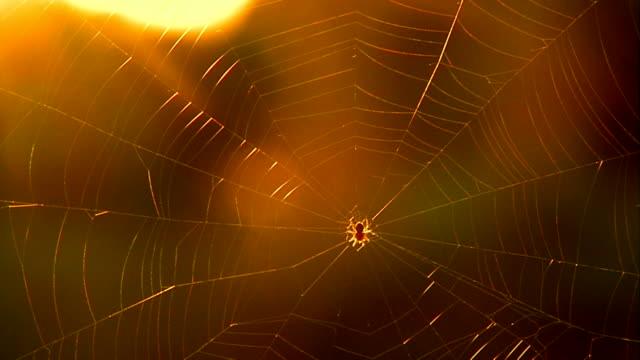 spider - moskitonetz stock-videos und b-roll-filmmaterial
