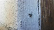 istock Spider wasp carrying a paralized spider on a wall, also called Pompilidae or Wegwespe 1294046799