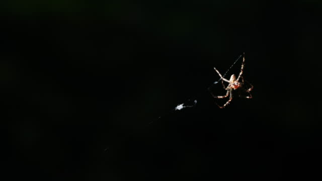 A spider weaves her net in the middle of the air with blurred background