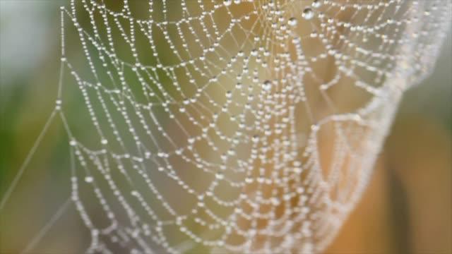 spinnennetz mit tau bedeckt - netzgewebe stock-videos und b-roll-filmmaterial