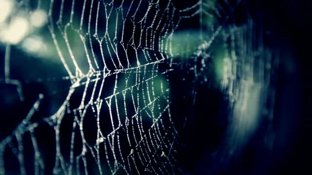 spider web in darkness - concept video - spindelväv bildbanksvideor och videomaterial från bakom kulisserna