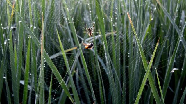 spider web in the field - spindelväv bildbanksvideor och videomaterial från bakom kulisserna