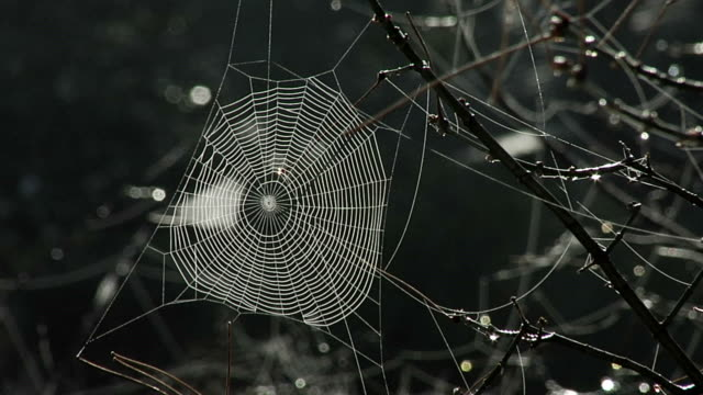 Spider web in tree video