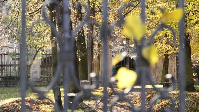 Spider web on the old  wrought gate in the autumn park. Rack focus. natural light wrought iron stock videos & royalty-free footage