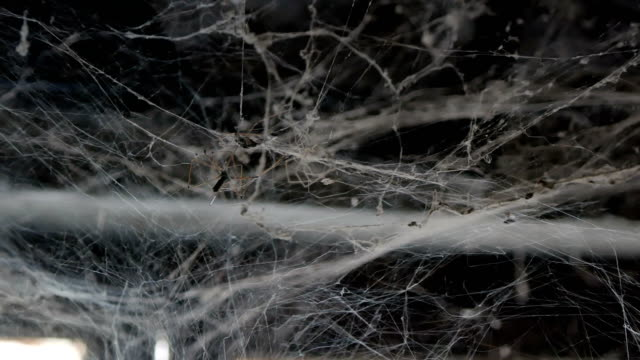 spider web - basement stock videos & royalty-free footage