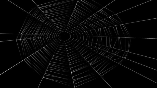 pajęczyna - pająk filmów i materiałów b-roll