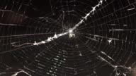 istock Spider web 867412508