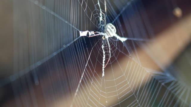 spindelnät - spindelväv bildbanksvideor och videomaterial från bakom kulisserna