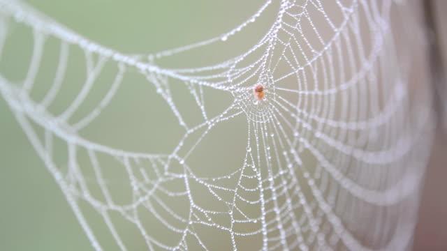 spindelnät med daggdroppar - spindelväv bildbanksvideor och videomaterial från bakom kulisserna