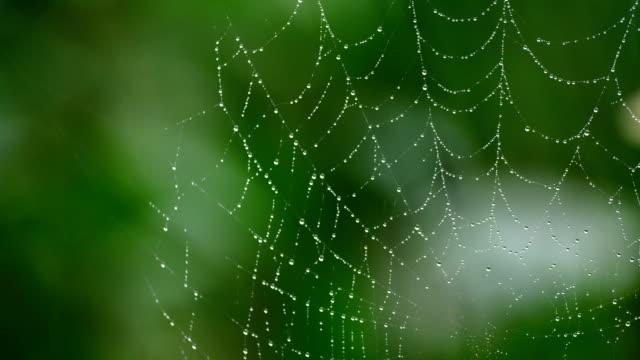 spindelnät med grön bakgrund - spindelväv bildbanksvideor och videomaterial från bakom kulisserna