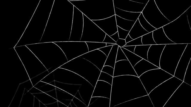 spider webs - spindel arachnid bildbanksvideor och videomaterial från bakom kulisserna
